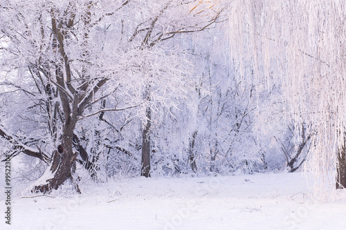 Foto op Aluminium Purper Snowy day