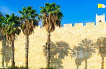 JERUSALEM, ISRAEL . Hree Palm Trees Against The Wall Of The Old City