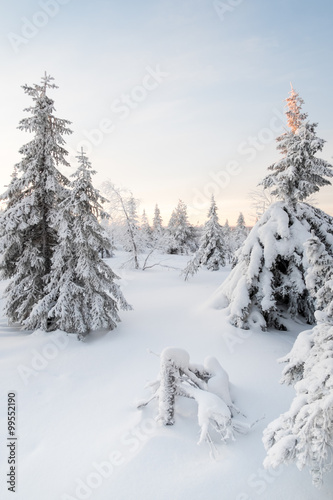 Fotobehang Forest covered by snow.