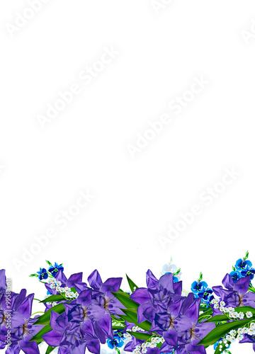 Fototapety, obrazy: Blue iris flower isolated on white background. Holiday card