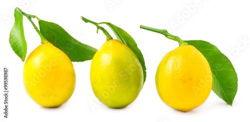 Valokuva  three lemons on a white background