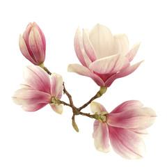Fototapeta Do kuchni magnolia