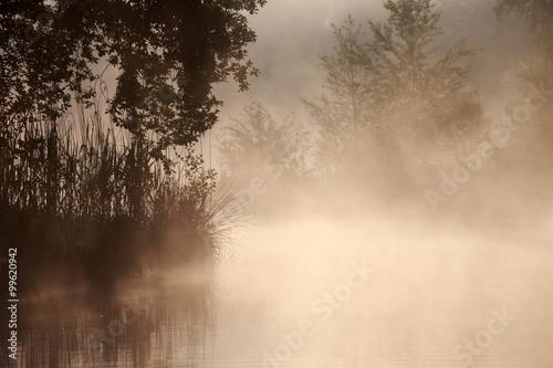 Papiers peints Foret brouillard Gräser und Bäume am See