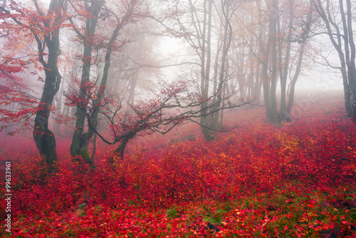 Foto op Canvas Bordeaux Autumn in the alpine forest