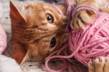 Kitten Next To A Ball Of Yarn