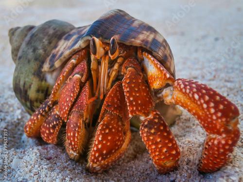 Fotografia cute hermit crab on beach in Western Samoa
