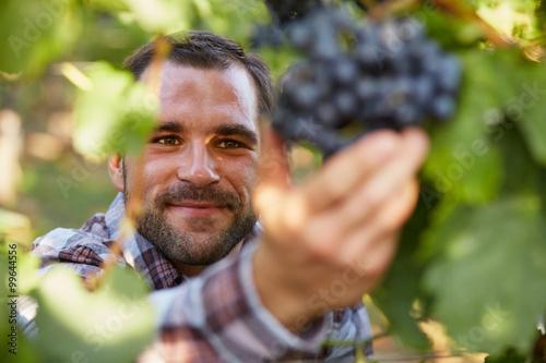 Pinturas sobre lienzo  Winemaker in vineyard