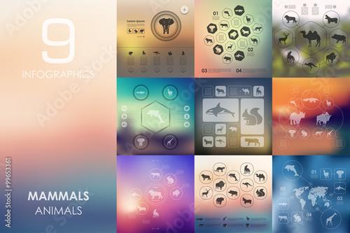 Fényképezés  mammals infographic with unfocused background