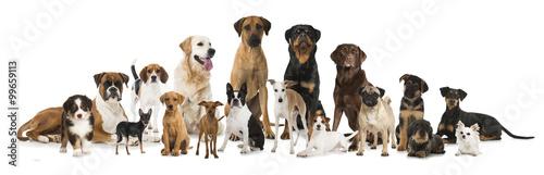 rozne-psy-rodowodowe