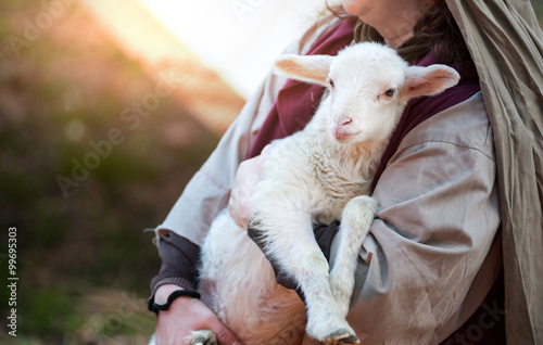 Canvas Print Lamb