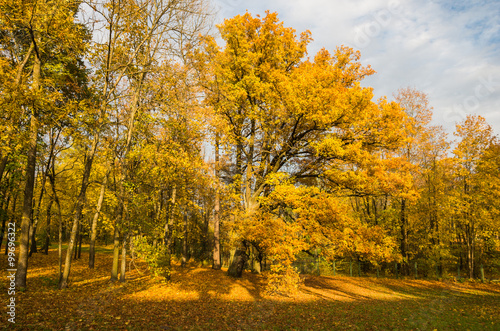 Foto op Canvas Herfst Autumn bright landscape with golden trees and falling leaves in Saint-Petersburg region.