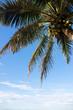 Palm trees on the beach at dawn in Sri Lanka