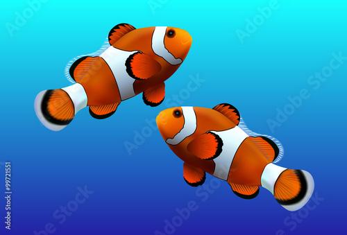 Fotografie, Obraz  Clown fish on blue background