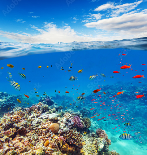 Underwater coral reef with horizon and water waves