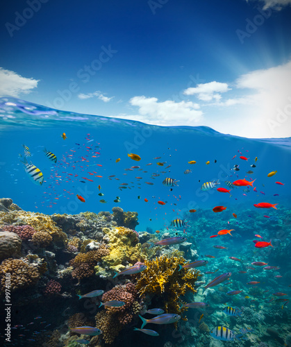 Poster Coral reefs Underwater coral reef with horizon and water waves
