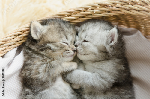 Photo  tabby kittens sleeping and hugging in a basket