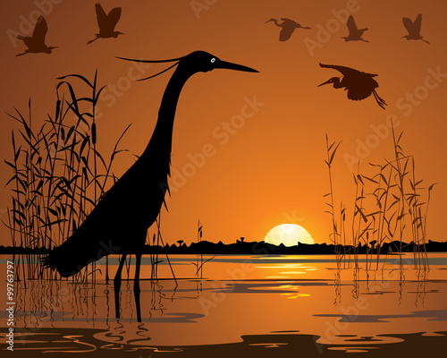 Fotografía Birds in sunset swamp illustration