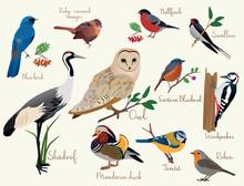 Bird Icons. Colorful Realistic Birds Icons Set Isolared
