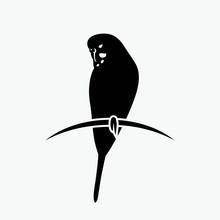 Budgerigar Parrot