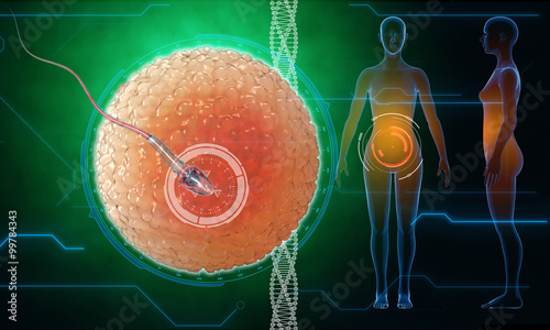 Photo  Human egg cell
