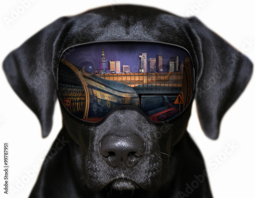 Obraz Panorama Warszawy - fotomontaż z psem, - fototapety do salonu