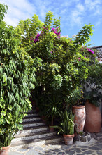 Tropical Plants In The Park In...