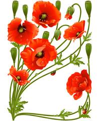 Naklejka Na szklane drzwi i okna Vector frame with red poppies and ladybug