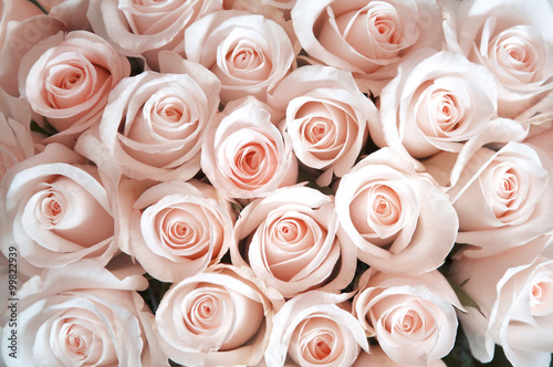 pink-roses-as-a-background