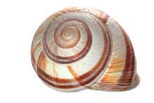 Snail Shell Closeup Isolated O...