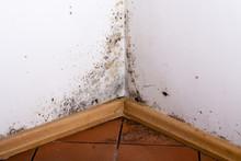 Black Mold In The Corner Of Ro...