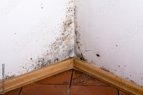 Fényképezés Black mold in the corner of room wall