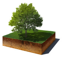Dirt Cube With Tree Isolated O...