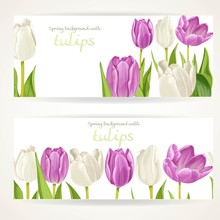 Two Horizontal Banners With White And Purple Flowers Tulips On A