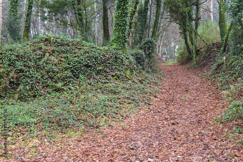 Tuinposter Weg in bos Pathway in Galicia (Spain)