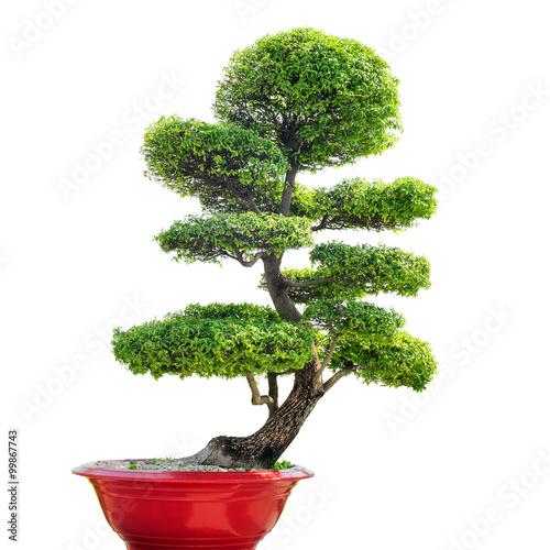 Fotobehang Bonsai Bonsai tree isolated on white background