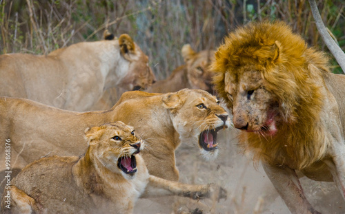 Staande foto Leeuw Fight in the family of lions. National Park. Kenya. Tanzania. Masai Mara. Serengeti. An excellent illustration.