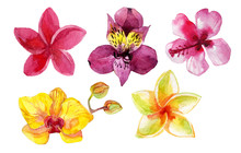 Set Of Watercolor Flowers Isolated On White. Hand Painted Illustration