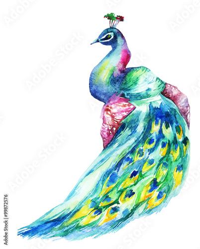 Fotografie, Obraz  Watercolor Peacock
