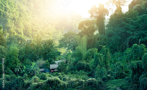 Foto  Traditional huts in Laos countryside surrounded by jungle forest