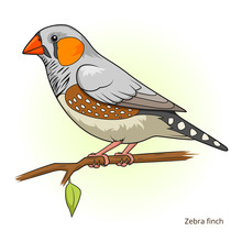 Zebra Finch Bird Educational Game Vector