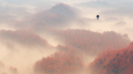 Fototapeta Aerial of misty autumn pine tree forest with hot air balloon.