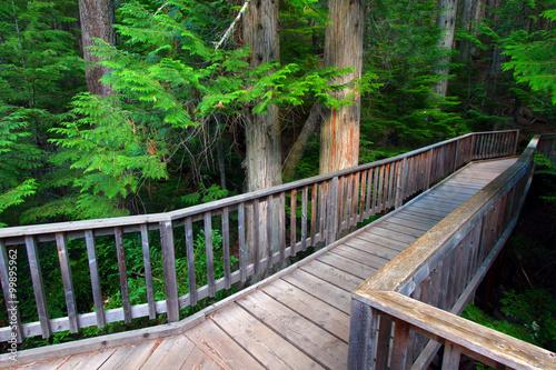 Valokuva  Trail of the Cedars at Glacier National Park