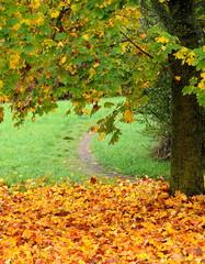 Fototapeta Jesień feuilles mortes