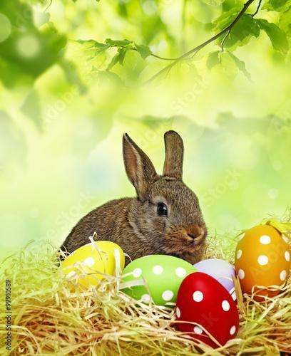 a little baby rabbit  - 99910589