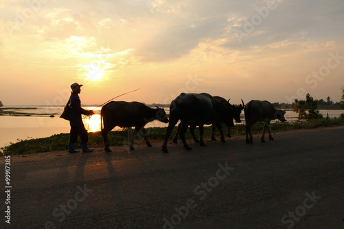 Spoed Foto op Canvas Farmer and his buffalo back go home on sunset river view