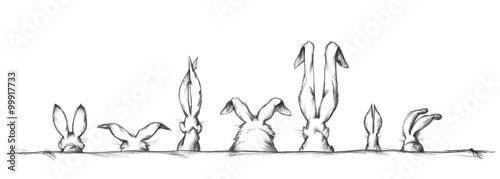 Hasenohren in unterschiedlicher Form und Größe