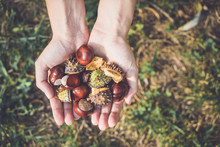 Handful Of Chestnuts