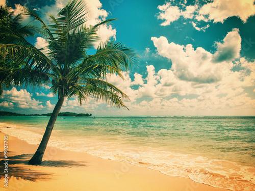 Fototapeta Tropical beach of Koh Samui island