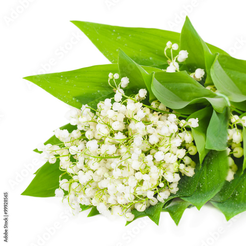 Wall Murals Lily of the valley Bunch of white lily of the valley isolation