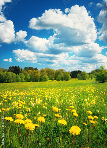 Canvas Prints Culture Field with dandelions and blue sky